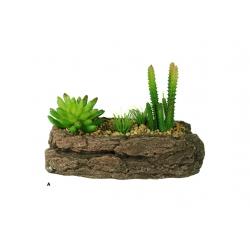 Bonsai s kaktusmi
