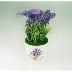 Bonsai Levandula s vôňou