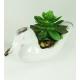 Bonsai Kačka